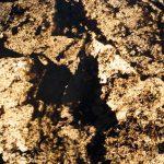 Rustique Translucent Stone